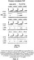 Определение чувствительности клеток к обработке ингибитором b-raf путем детекции мутации k-ras и уровней экспрессии rtk