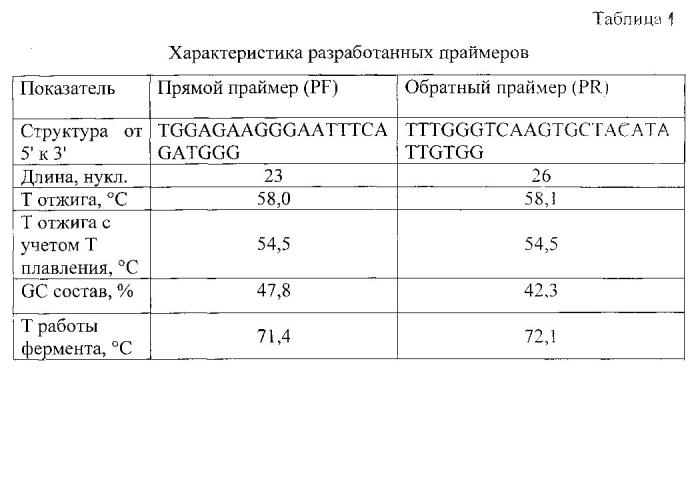 Пара синтетических олигонуклеотидных праймеров для выявления вируса иммунодефицита кошек и способ диагностики вирусного иммунодефицита кошек