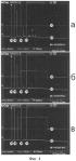 Способ обработки импульсных сигналов на основе ядерного спинового эха