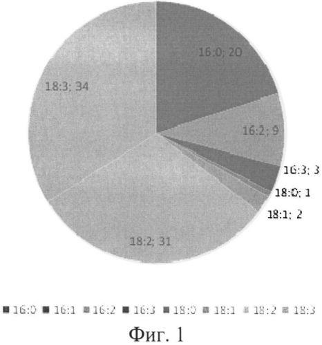 Штамм микроводоросли chlorella vulgaris, предназначенный для очистки сточных вод сельскохозяйственных и спиртовых производств