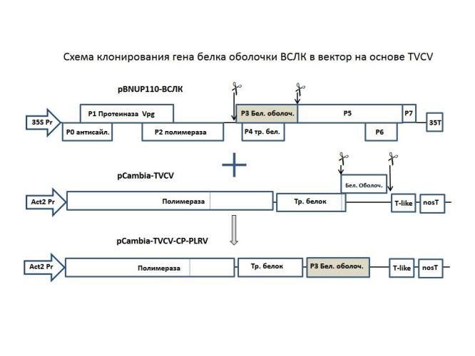 Схема химерного вирусного