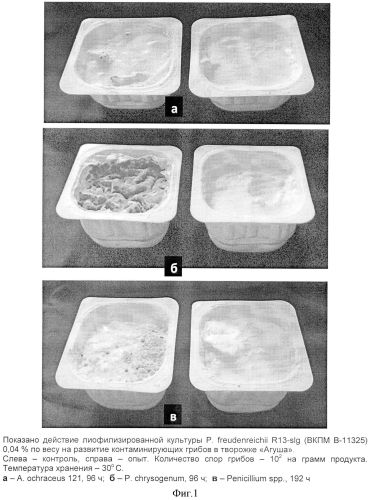 Способ защиты кисломолочных продуктов от порчи грибами