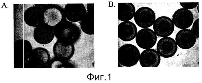 Культура плюрипотентных стволовых клеток на микроносителях