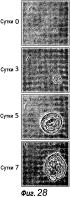 Культуральная среда для эпителиальных стволовых клеток и органоидов, содержащих указанные стволовые клетки