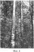 Способ автоматизированного принятия решений по назначению деревьев в рубку при их обработке лесозаготовительной машиной