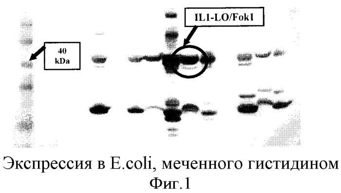 Опосредованная наночастицами доставка сиквенс-специфичных нуклеаз