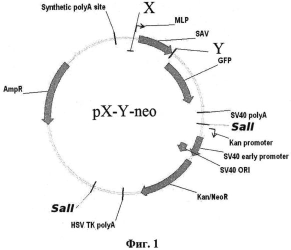 Способ оценки биоактивности химических соединений