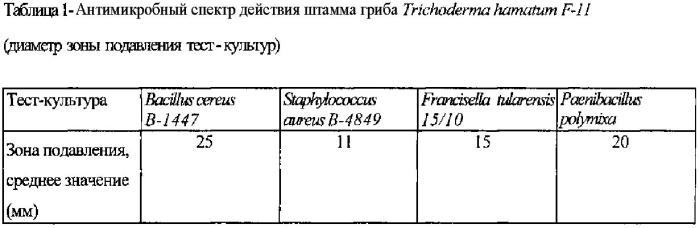 Штамм микромицета trichoderma hamatum, обладающий антибактериальной активностью в отношении возбудителя сибирской язвы bacillus anthracis