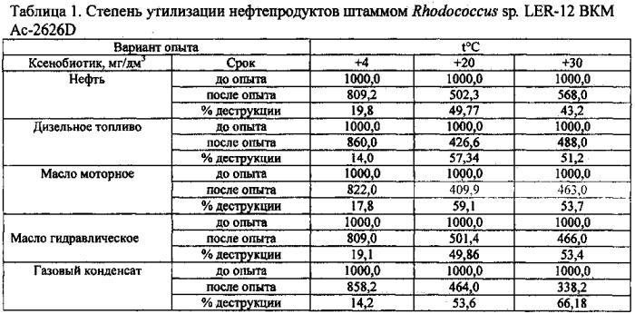 Штамм бактерий rhodococcus sp. - деструктор нефти и нефтепродуктов