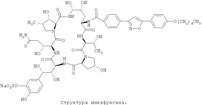 Штамм, продуцирующий пептидные антибиотики с высоким выходом, способ его получения и применение