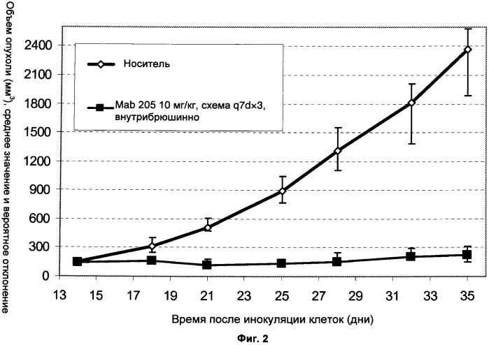 Антитела к her3 и их применения