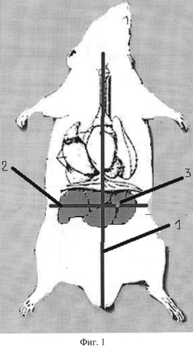 Способ моделирования абсцесса печени