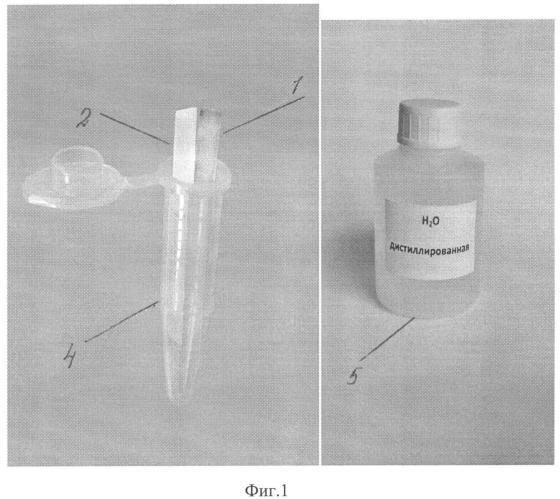 Набор для тестирования спермы в пятнах на исследуемом образце