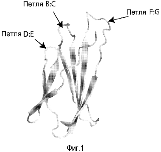 Композиции, способы получения и применение каркаса на основе домена фибронектина типа iii