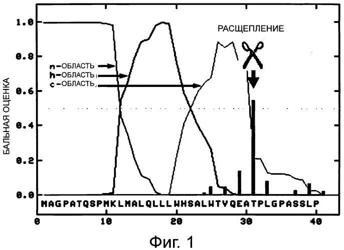 Способ получения рекомбинантного человеческого g-csf