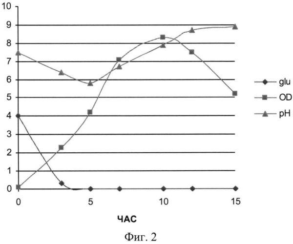 Способ получения рекомбинантного белка sav-rgd, специфически узнающего клетки меланомы