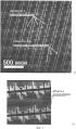 Биорезорбируемая полимерная клеточная матрица