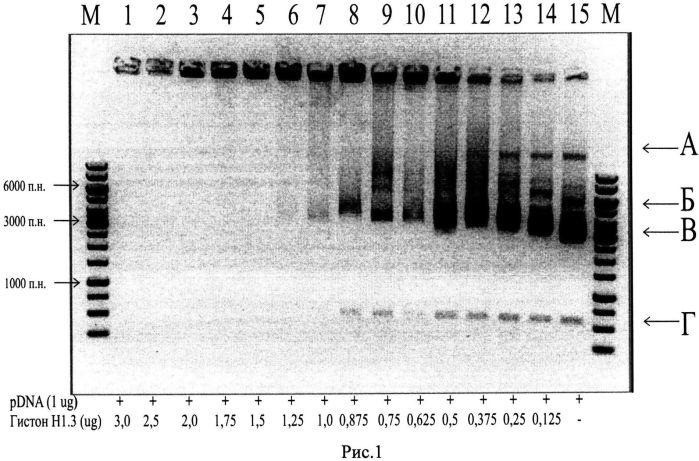 Способ доставки нуклеиновых кислот в эукариотические клетки
