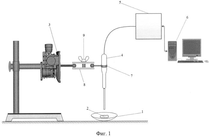Устройство для диагностики состояния микрогемолимфодинамики in vivo