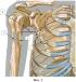 Способ пересадки кровоснабжаемого трансплантата третьего ребра для замещения дефектов плечевой кости