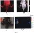 Способ регистрации внутриклеточного ph опухолевых клеток