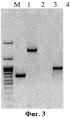 Рекомбинантный штамм vv-gmcsf-s1/3 вируса осповакцины, продуцирующий секретируемый гранулоцитарно-макрофагальный колониестимулирующий фактор человека
