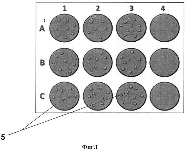 Способ подготовки биоматериала для пцр диагностики вируса лейкоза крупного рогатого скота (вл крс)