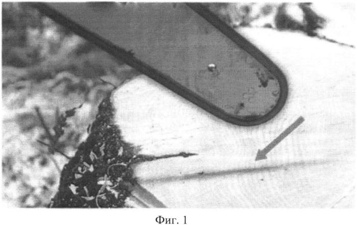 Способ внесения арборицидов при валке деревьев мягколиственных пород