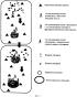 Иммунохимическое определение одиночных мишеней