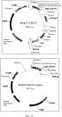 Антитела против ангиопоэтина-2 человека