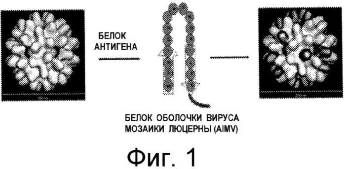 Вирусоподобные частицы, содержащие белки-мишени, слитые с белками оболочки растительных вирусов