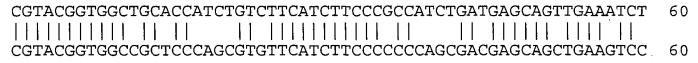 Моноклональные антитела против клаудина-18 для лечения рака