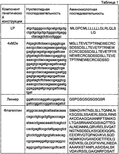 Противогриппозная вакцина широкого спектра действия против птичьего гриппа а на основе эктодомена белка м2