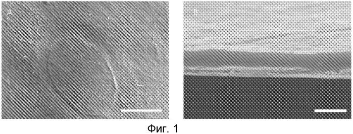 Способ криоконсервации клеток, искусственные клеточные конструкции или трехмерные сложные комплексы тканей