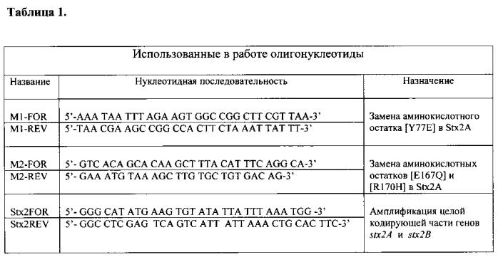 Нетоксичный рекомбинантный шига токсин 2-го типа (stx2)