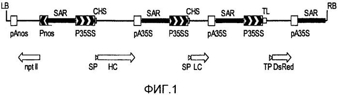 Способ получения моноклональной линии растительных клеток