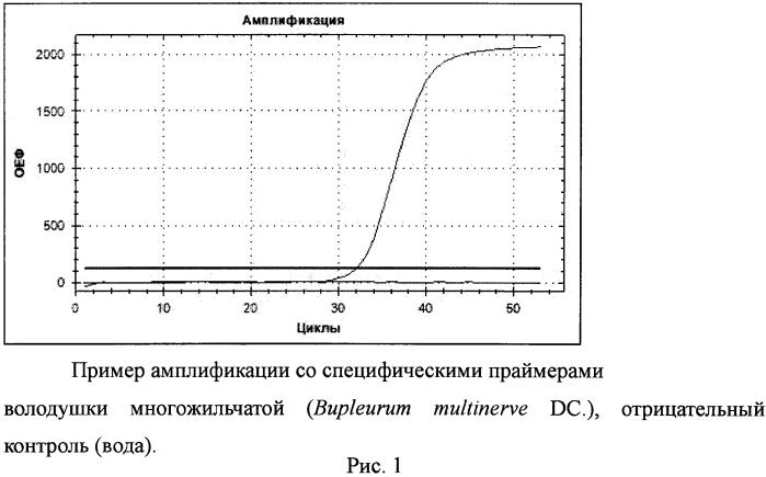 Набор синтетических олигонуклеотидов для выявления видовой принадлежности володушки многожильчатой (bupleurum multinerve dc.)