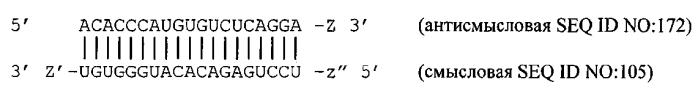 Модуляция экспрессии hsp47