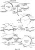 Фермент лизосомальной болезни накопления