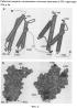Варианты группы 5 аллергенов злаковых со сниженной аллергенностью вследствие мутагенеза остатков пролина