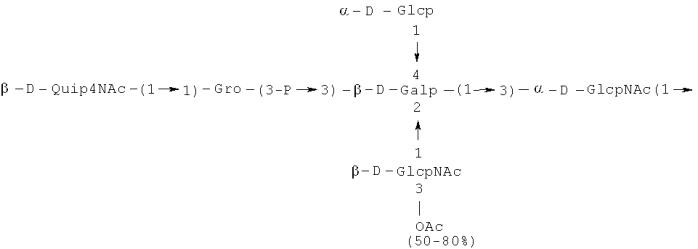 Полисахарид и его производные с активностью к фиколину-3, способ получения и применения