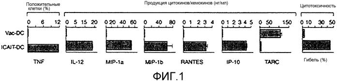 Система и способ получения и хранения активированных зрелых дендритных клеток