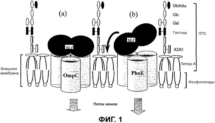 Способ производства лактоферрина, фракция, содержащая лактоферрин, и ее применения