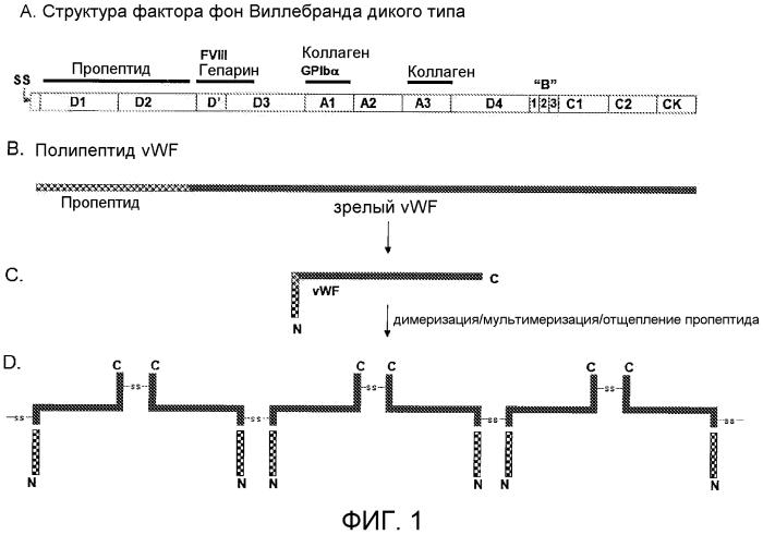 Содержащие фактор фон виллебранда (vwf) препараты и способы, наборы и применения, связанные с ними