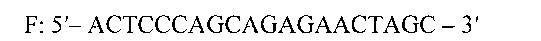 Набор синтетических олигодезоксирибонуклеотидов для амплификации и детекции эндогенного внутреннего контроля при исследованиях биологического материала крупного рогатого скота методом полимеразной цепной реакции в режиме реального времени