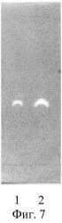 Способ идентификации и количественного определения аскорбиновой кислоты