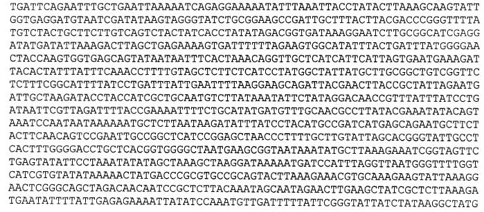 Штамм риккетсий группы клещевой пятнистой лихорадки вида rickettsia heilongjiangensis, используемый для идентификации риккетсий и получения диагностических препаратов