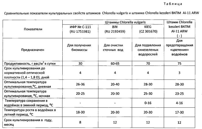 Планктонный штамм chlorella kessleri для предотвращения цветения водоёмов синезелеными водорослями