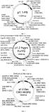 Плазмида для экспрессии рекомбинантного фактора свёртываемости крови ix человека, клетка сно - продуцент рекомбинантного фактора свёртываемости крови ix человека и способ получения указанного фактора