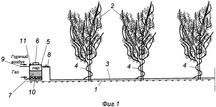 Способ защиты деревьев от вредителей
